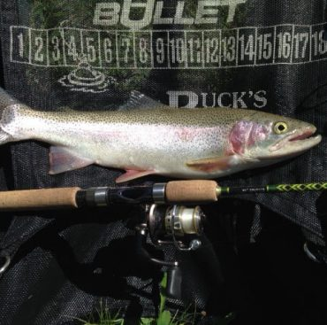 22 inch Cutthroat Trout caught from a float tube on a 2 to 6 pound Barrett Custom casting rod!